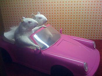 Squirrels in a car
