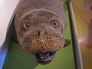 Happy_dead_seal