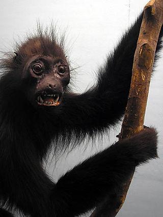 Nightmare_monkey_3