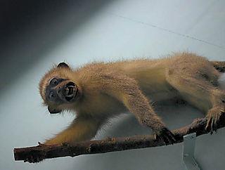 Nightmare_monkey