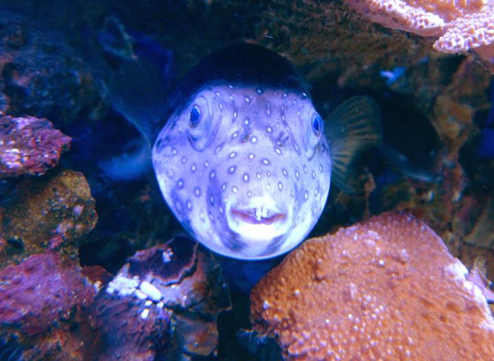 Goofy_fish