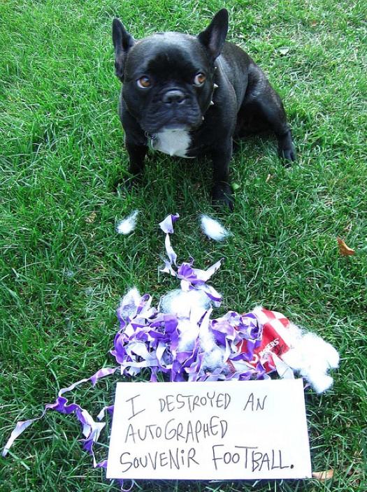 Shame dog
