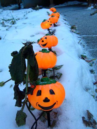 Pumpkinwalk