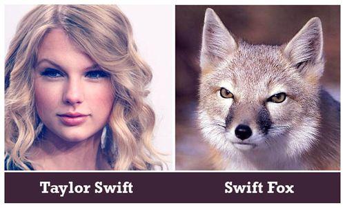 Swiftfox