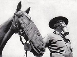Gassy_horse