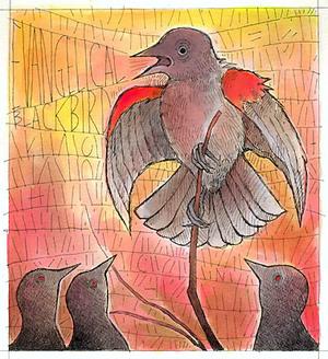 Blackbird_72