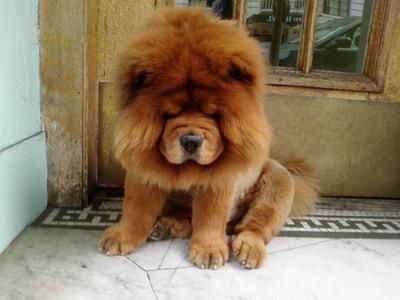 Sf_lion