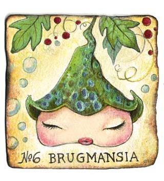 Brugmansia_1