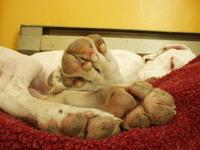 Otis_feets
