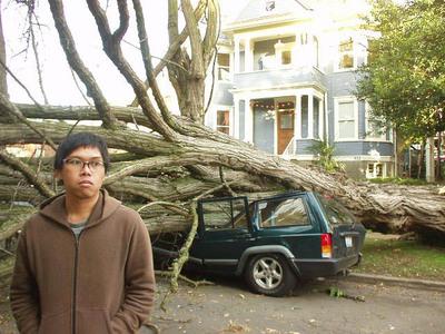 Tree_kills_jeep